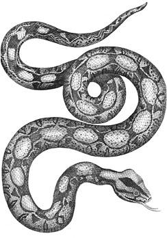 jm_snake